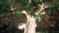 澳门金沙发财树!