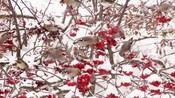 活灵活现的国画素材,自然中的国画花鸟图