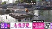 贵宾&鬆狮共享游泳池!