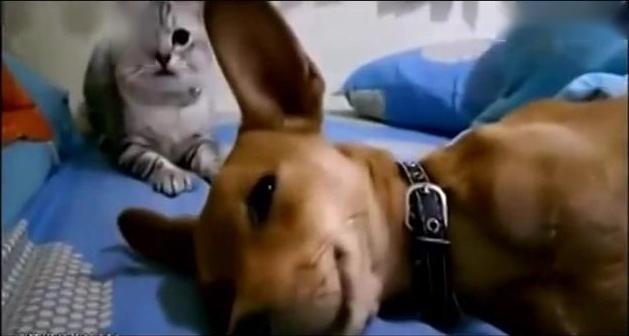 动物搞笑视频,好好笑.
