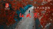 南京旅游-南京最佳红叶观赏地,红枫岗