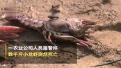 熊孩子买农药毒死千斤小龙虾,父亲道歉:管教不严