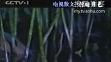 [电视诗歌散文] 荷塘月色(节选)