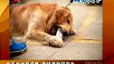 金毛犬捡瓶成瘾卖钱资助研究生(流畅)金毛寻回犬的价格 http://www.52mingquan.com/