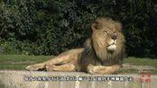 动物世界的猛兽战斗力排行, 老虎排第5, 第一名出乎人意料!