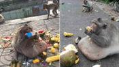 世上最胖的动物,一看被吓一跳,它们的肥胖程度丝毫不输人类!