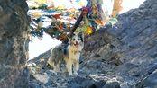 全网唯一冈仁波齐转山的狗子,瘦猴和锄头的旅行一直在路上