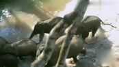 哈哈农夫:超越贾乃亮王源金瀚集体进村抓鱼,超越见鱼兴奋大叫