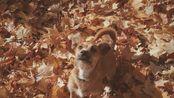 欢迎收看我家傻狗的日常JackRussell+Dachshund=Tato