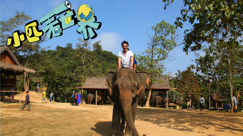 小匹看世界 老挝的万象城里到底有没有一万头大象?